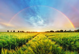 Fototapety Rainbow Rural landscape with wheat field on sunset