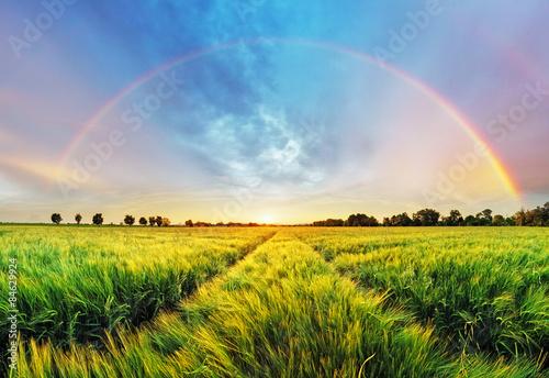 obraz lub plakat Krajobrazu wiejskiego z tęczy na polu pszenicy o zachodzie słońca