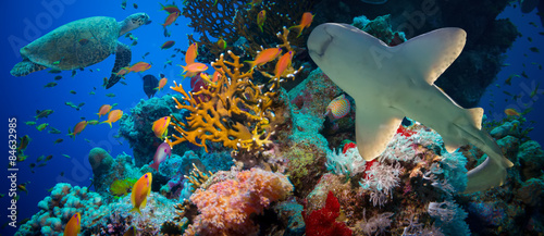 Obraz na Szkle Tropical Anthias fish with net fire corals and shark