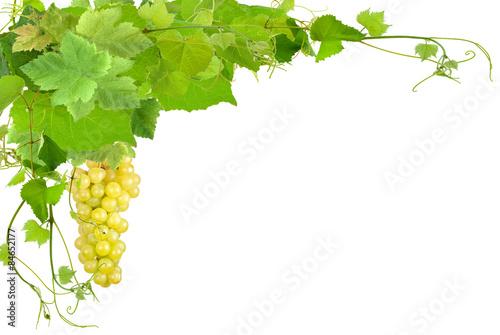 grappe de raisin blanc et feuilles de vigne fond blanc photo libre de droits sur la banque d. Black Bedroom Furniture Sets. Home Design Ideas
