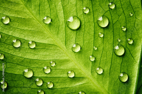 Panel Szklany Green leaf with drops of water
