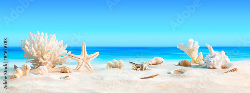 Fototapeta Landscape with seashells on tropical beach - summer holiday