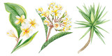 Tropical Plants Watercolor Illustration