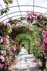 romantic path into a luxuriant  rose garden © TTLmedia