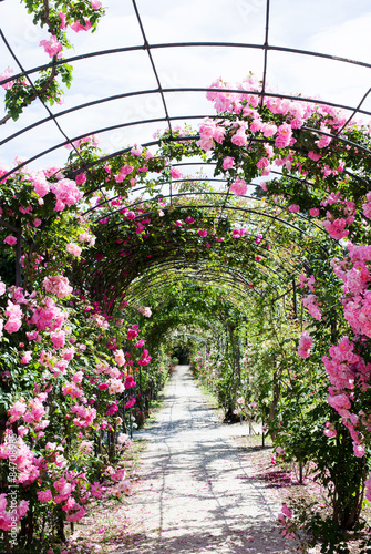 romantic path into a luxuriant  rose garden