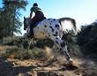 Obrazy na płótnie, fototapety, zdjęcia, fotoobrazy drukowane : Horse riding