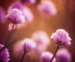 pink garden flowers at sunset