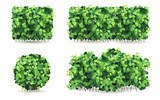 Set of bushes with green leaves of different shapes. - 84846313