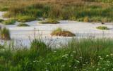 Coastal salt marsh. Solila, Tivat, Montenegro