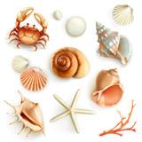 Fototapety Seashells, set vector icons