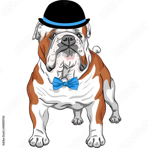 vector hipster dog English Bulldog breed - 84890763