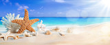seashells on seashore in tropical beach - summer holiday background