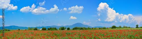 Obraz na Szkle Beautiful panorama of a poppy field