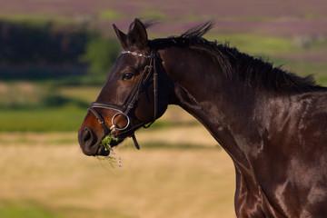 Dark horse portrait in motion