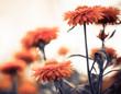 orange flowers at summer garden