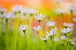 colorful summer flowers background