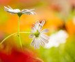 summer flowers at colorful background