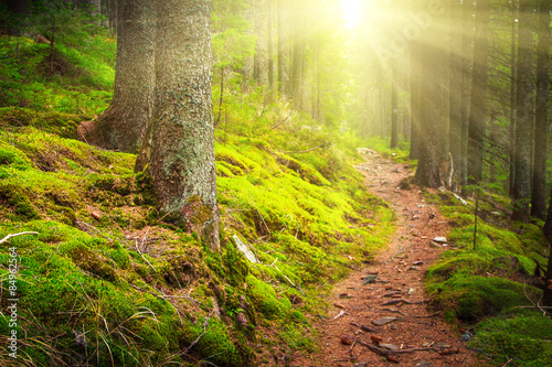 Fotobehang Betoverde Bos Landscape dense mountain forest in sunlight.