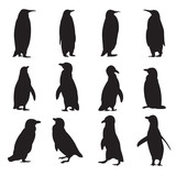 Collection of penguins