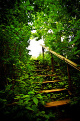 staircase in a thicket