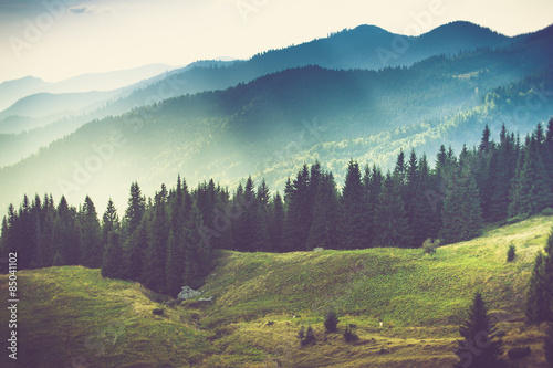 Beautiful summer mountain landscape. - 85041102