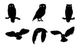 Owl Bird Silhouette