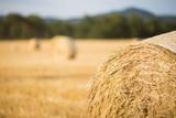 Fototapeta Straw bales field