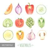 Fototapety Watercolor vegetables organic vector set