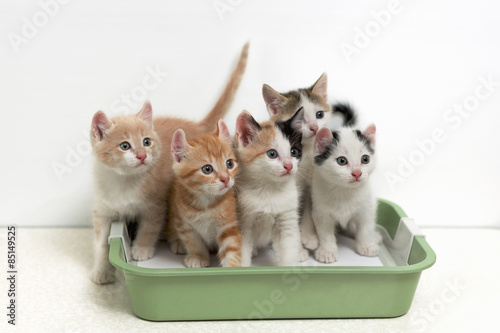 train cat litter box training