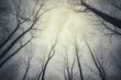 upward view in spooky forest