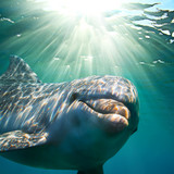 A dolphin underwater with sunbeams. Closeup portrait - 85164736