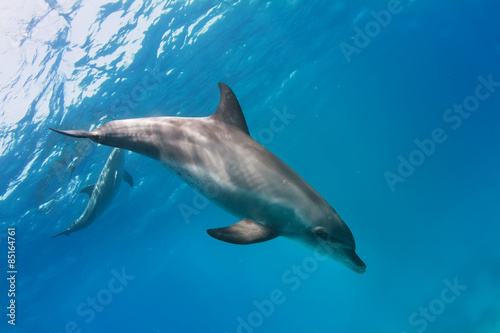 Poster a pair of dolphins playing in sunrays underwater