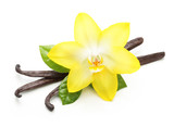 Vanilla pods and orchid flower isolated