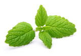 Green mint leaves isolated  - 85188333