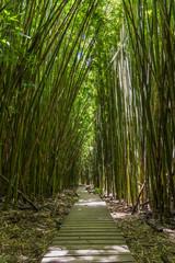 Pipiwai Trail auf Maui © vette91