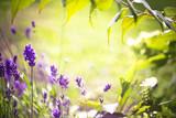 Fototapety Sommer, Duft, Lavendel