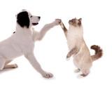 Hund und Katze High Five - 85207130