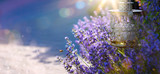 Fototapety art Summer or spring beautiful garden with lavender flowers