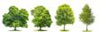 Obrazy na płótnie, fototapety, zdjęcia, fotoobrazy drukowane : Set of green trees maple, birch, chestnut. Nature objects