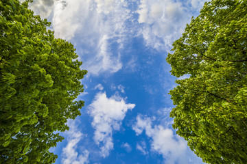 Beautiful blue sky and lush green trees