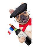 french bulldog with  french  beret hat, isolated on white background, behind white and blank banner  or placard, holding a bottle of red wine