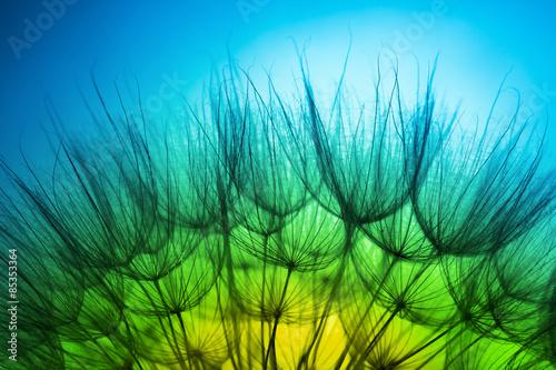 Naklejka close up of dandelion