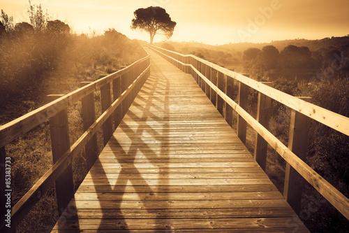 fototapeta na ścianę krajobraz z drewnianym ścieżki z drzewa o zachodzie słońca