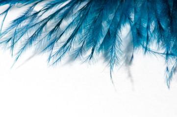 turkus pióro anioła, na białym tle