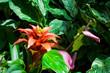 Bromelia flower