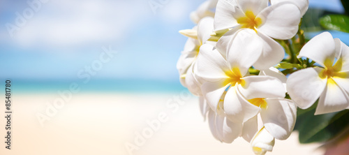 Poster White tropical flower over beautiful beach