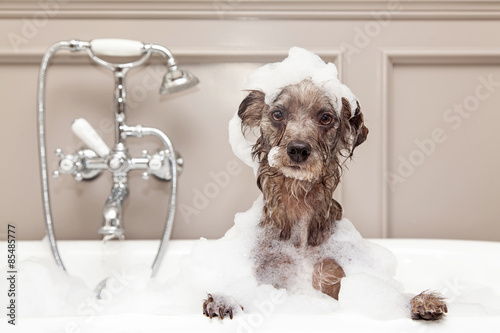 Plagát, Obraz Funny Dog Taking Bubble Bath