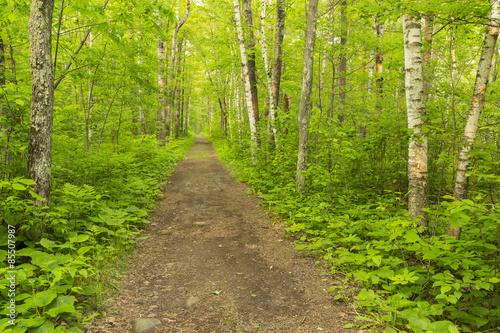 mata magnetyczna Szlak turystyczny w lesie