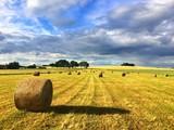 Fototapeta Harvest time - summer landscape after storm