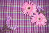 vintage of pink gerbera flower on violate cloth poster